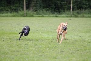 Idoya und Chase